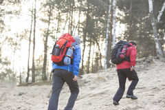 Male backpackers walking in forest Royalty Free Stock Photo