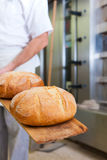 Male baker baking bread Stock Images