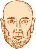 Male Bald Head Bearded Etching Royalty Free Stock Images