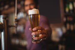 Male bar tender giving glass of beer Stock Image