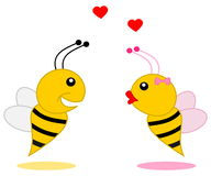 Male bee that found his partner Stock Photography
