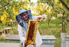 Male bee-keeper in a special protective suit and a hat with a frame for bees. On the background of an apiary and a garden stock photography