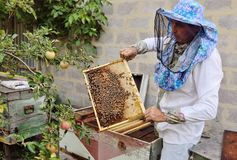 Bee-keeper takes out of the beehive or apiary the frame for bees. A male bee-keeper takes out of the beehive or apiary the frame for bees stock photo