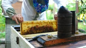 Bee-keeper takes out of the beehive or apiary the frame for bees. A male bee-keeper takes out of the beehive or apiary the frame for bees stock video