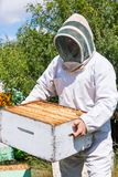 Male Beekeeper Carrying Honeycomb Box At Apiary stock images