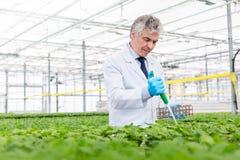 Male biochemist using pipette on herbs in plant nursery stock photo