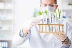 The male biochemist working in the lab on plants. Male biochemist working in the lab on plants Stock Image