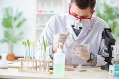 The male biochemist working in the lab on plants. Male biochemist working in the lab on plants Stock Images