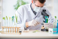 The male biochemist working in the lab on plants. Male biochemist working in the lab on plants Stock Photos