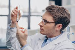 Biologist with plant in flask. Male biologist in eyeglasses working with plant in flask in chemical laboratory stock photography