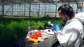 Male biologist uses a microscope while working with plants in a greenhouse.