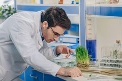 Biologist with grass in laboratory. Male biologist working with grass in chemical laboratory Royalty Free Stock Image