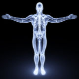 Male body. Under X-rays. 3d render Stock Photography