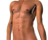 Male  body. An isolated image of a male body torso, showing the 'six pack Stock Image
