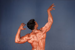 Male Body Builder Royalty Free Stock Image