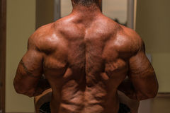 Male body builder flexing his back Royalty Free Stock Photos