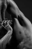 Male body-scape Stock Image