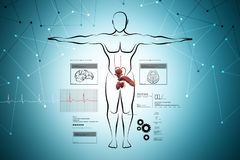 Male body sketch with urinary system Royalty Free Stock Photos