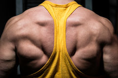 Male bodybuilder flexing his back Royalty Free Stock Photo
