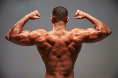 Male bodybuilder flexing his biceps, back view Royalty Free Stock Photos