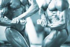 Male bodybuilder muscular man Stock Image