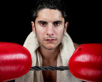 Male Boxer with gloves. Male boxer with red gloves on royalty free stock photos