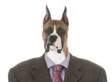 Male boxer portrait Stock Image