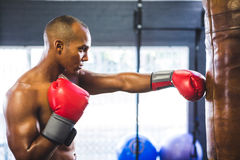 Male boxer punching bag in fitness studio Royalty Free Stock Image