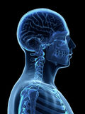 Male brain Stock Photo