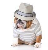 Male bulldog Stock Images