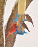 Male Cardinal and Sparrows at Feeder in Winter. A male cardinal sitting on a bird feeder on a snowy winter day looks up at a pair of sparrows who are also on the Royalty Free Stock Photos