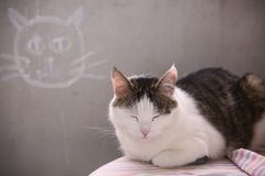 Male cat sleeping on concret wall background. With white cat drawing royalty free stock image