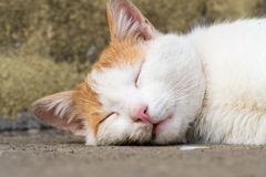 A male cat is sleeping on the floor made of cement. In the backyard garden Stock Photography