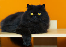Male cat taking rest at orange background Stock Photos