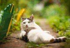 Free Male Cat Wash Himself On Summer Green Garden Background Royalty Free Stock Images - 133844499