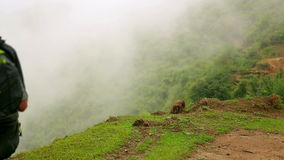 Male caucasian tourist trekking walking at himalayan mountains, Nepal stock video