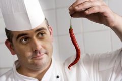 Male chef examining single red chilli pepper in commercial kitchen, close-up Royalty Free Stock Photography