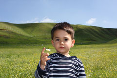 Male child in the field. With a daisy in the hand Stock Photo