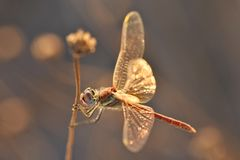Dragonfly on grass stem stock images