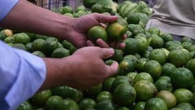 Male consumer selecting fresh lime at the supermarket in Slow Motion.  stock video footage