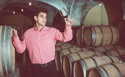 Male customer tasting red wine from wooden barrels. Satisfied male customer tasting red wine from wooden barrels in factory Stock Photos