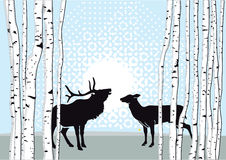 Male deer and doe standing in forest Stock Photography