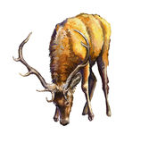 Male deer. Oil painting tablet Royalty Free Stock Photos
