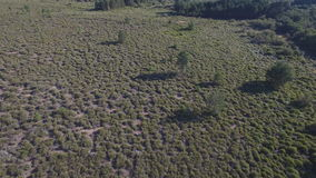 Male deers running in the smoothness, aerial view. Aerial view of 2 deers running over bush, Male animals in 4K stock footage