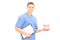 Male dentist surgeon holding dentures and clipboard. Male dentist surgeon holding a teeth sample made out of plaster cast and clipboard isolated on white Royalty Free Stock Photography