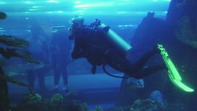 Male diver with scuba is swimming inside large aquarium with tropical fishes, visitors in tunnel. Male diver with scuba is swimming inside large aquarium with stock video