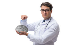 The male doctor with the brain isolated on white. Male doctor with the brain isolated on white royalty free stock image