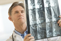 Male Doctor Examining X-Ray Report Royalty Free Stock Image