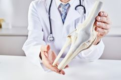 Male doctor holding model anatomy of knee bone. A male doctor with a stethoscope holding a model anatomy of a human knee bone royalty free stock image