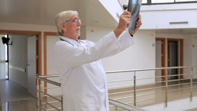 Male doctor looking at a xray in the hallway Stock Photo